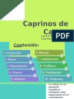 Caprinos de Carne (Final)