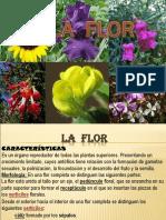 13. La Flor
