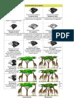 Los Pinzones de Darwin