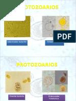 morfologiaparasitaria