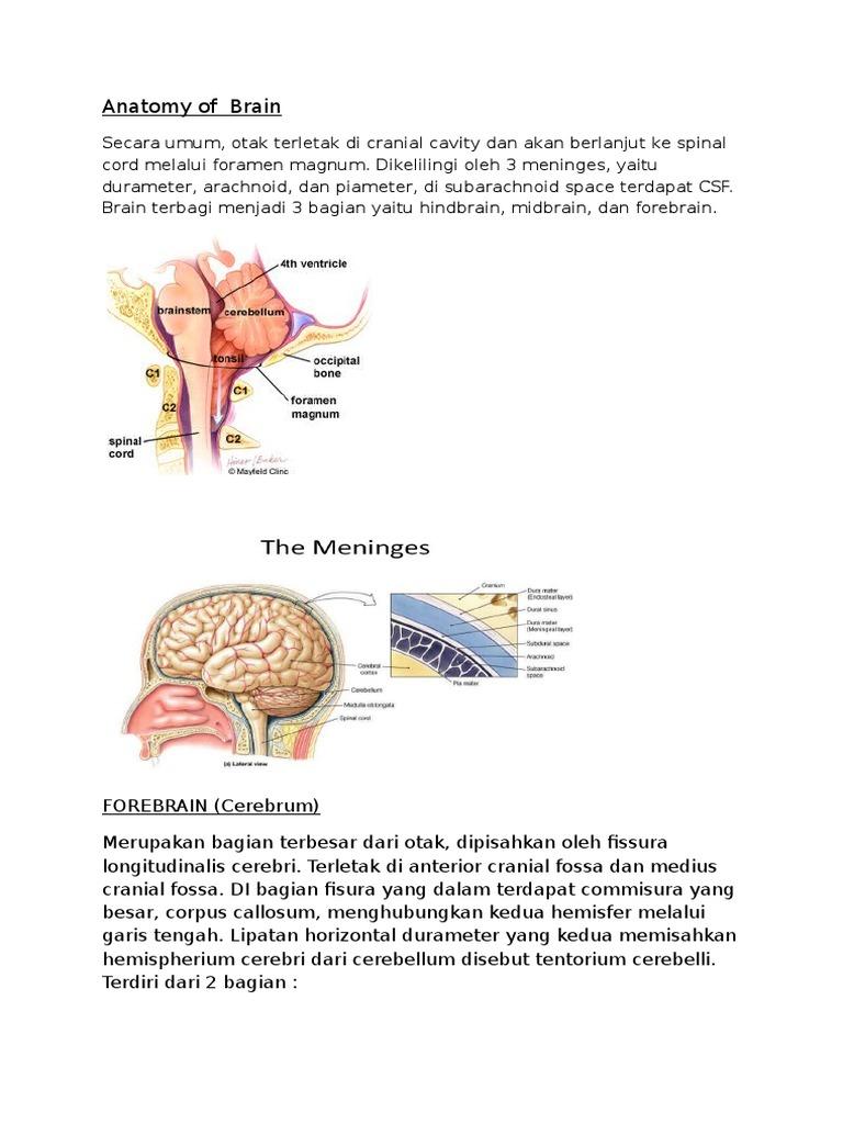Ziemlich Spinalkanal Anatomie Ideen - Anatomie Ideen - finotti.info