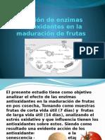 Función de Enzimas Antioxidantes en La Maduración De
