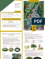 Diptico Minador de Hojas