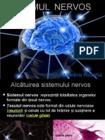 Sistemul_nervos_alcatuire