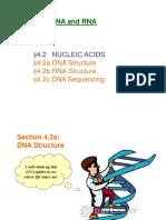 4.2-NucleicAcids