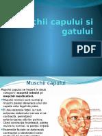 Muschii Capului Si Gatului