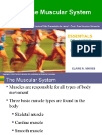 Muscular System - Part 1