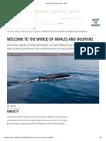 Cetacean Facts & Information - WDC