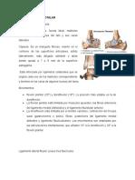 Articulacion Tibiotalr y Subtalar