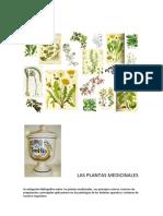 Investigación Bibliográfica Sobre Las Plantas Medicinales