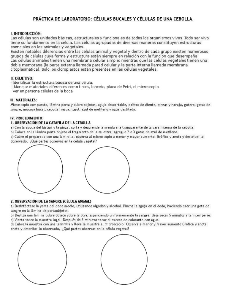 Práctica De Laboratorio Células Bucales Y Células De Una