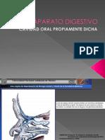 SISTEMA_DIGESTIVO_PARTE1.pdf