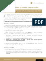 Fisiopatologia de La Glandula Suprarenal