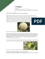 Cultivo del melón.docx