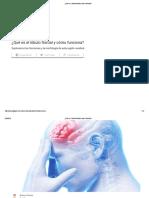 _¿Qué Es El Lóbulo Frontal y Cómo Funciona