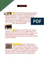 ANIMALE.doc