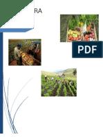 228520123 Nic 41 Agricultura Indice