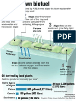 How Algae Can Clean - And Make - Oil
