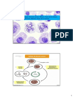 Clase_13._Ciclo_Celular_Mitosis_Meiosis.pdf