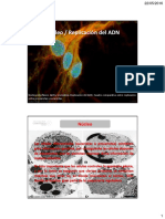 clase_9_-_10._Nucleo_Replicación_ADN.pdf