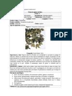 Fichas Plantas de Joyaczhí