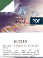 nucleo (1).pptx