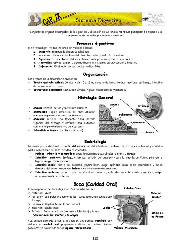 Contemporáneo Sistema Digestivo Etiqueta De Hoja De Cálculo ...