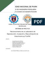 Guía de Prácticas de Cultivo de Fitoplancton
