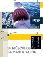 10 Musculos de La Masticacic3b3n