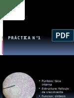 láminas de histología.pptx