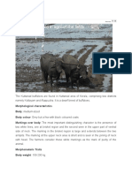 Kuttanad Buffalo Breed.docx