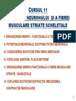 Curs 10 Neuron Fb Musculara 2013