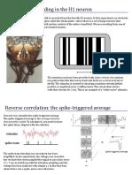 coding in neuron STAtutorial.pdf