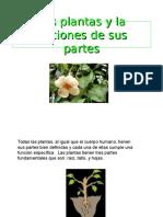lasplantasylafuncionesdesuspartes-121108101630-phpapp01.ppt