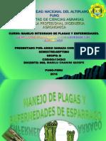 MANEJO INTEGRADO DE PLAGAS Y ENFERMEDADES DE  ESPARRAGO