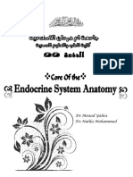 Anatomia sistemului endocrin