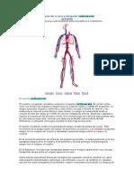 Anatomía Del Corazón y Del Aparato Cardiovascular