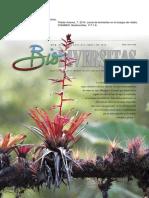 2014 Lluvia de Bromelias en El Bosque de Niebla