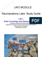 Neuro Lab 1 Study Guide (1)
