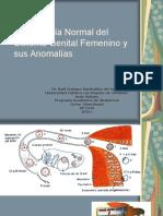 01 Embriologanormaldelsistemagenitalfemeninoysusanomalas 100514105634 Phpapp02