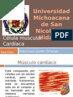 19 Celulamuscularcardiaca 121214015531 Phpapp02