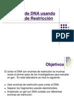 digestion-DNA.pdf