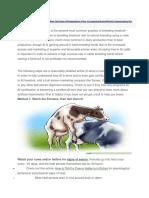How to Inseminate Cow en Heifer