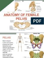 Anatomy of Female Pelvis