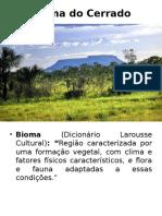 Bioma Do Cerrado