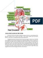 Fetal Circulationdocx
