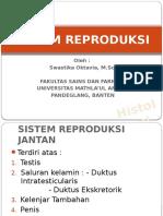 10. Sistem Reproduksi