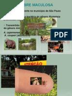 104906814-Aula-Febre-Maculosa-Prof-Fernando-A-Silva.ppt