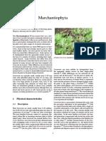 Marchantiophyta