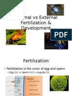 internal vs  external development